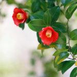 12ヶ月の和花をいけるレッスン